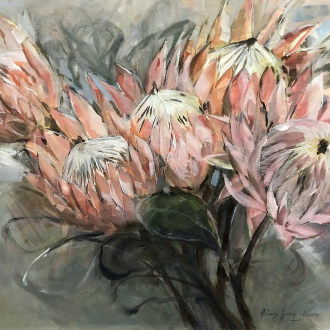 Protea beauties