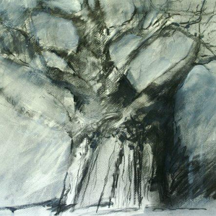 Baobab sketch